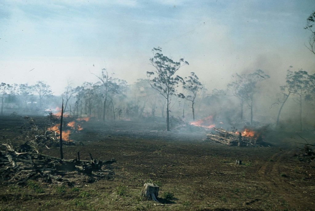 Burning at Bob Lewis farm Drumborg 1966