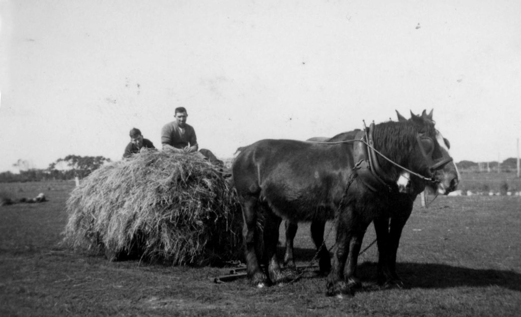 Horses with hay on sled