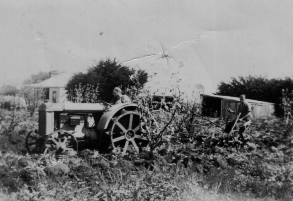 Plowing orchard Gorae West c1938